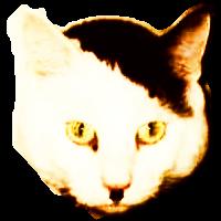 Hitlercat200X200